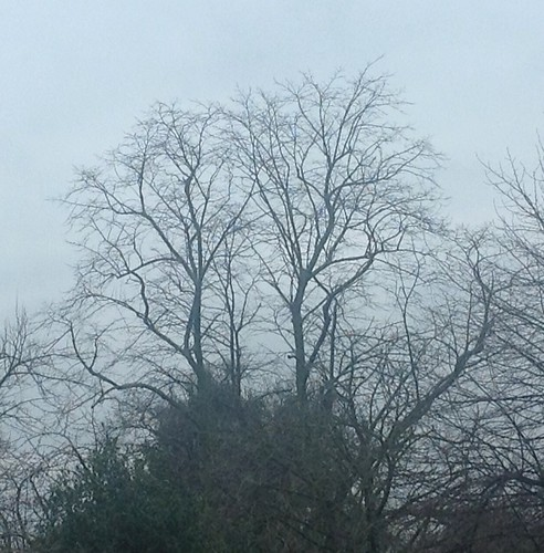 Tree across window width=