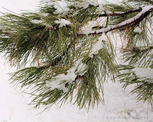 Snow Storm Toronto 2013 02 27 (1)