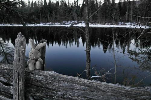 Travel Bunny at The Madawaska