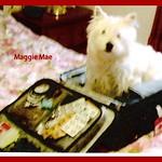 Maggie Mae