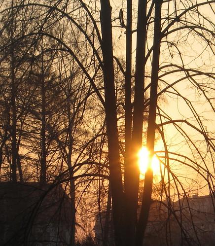 trees sunrise serbia sappho