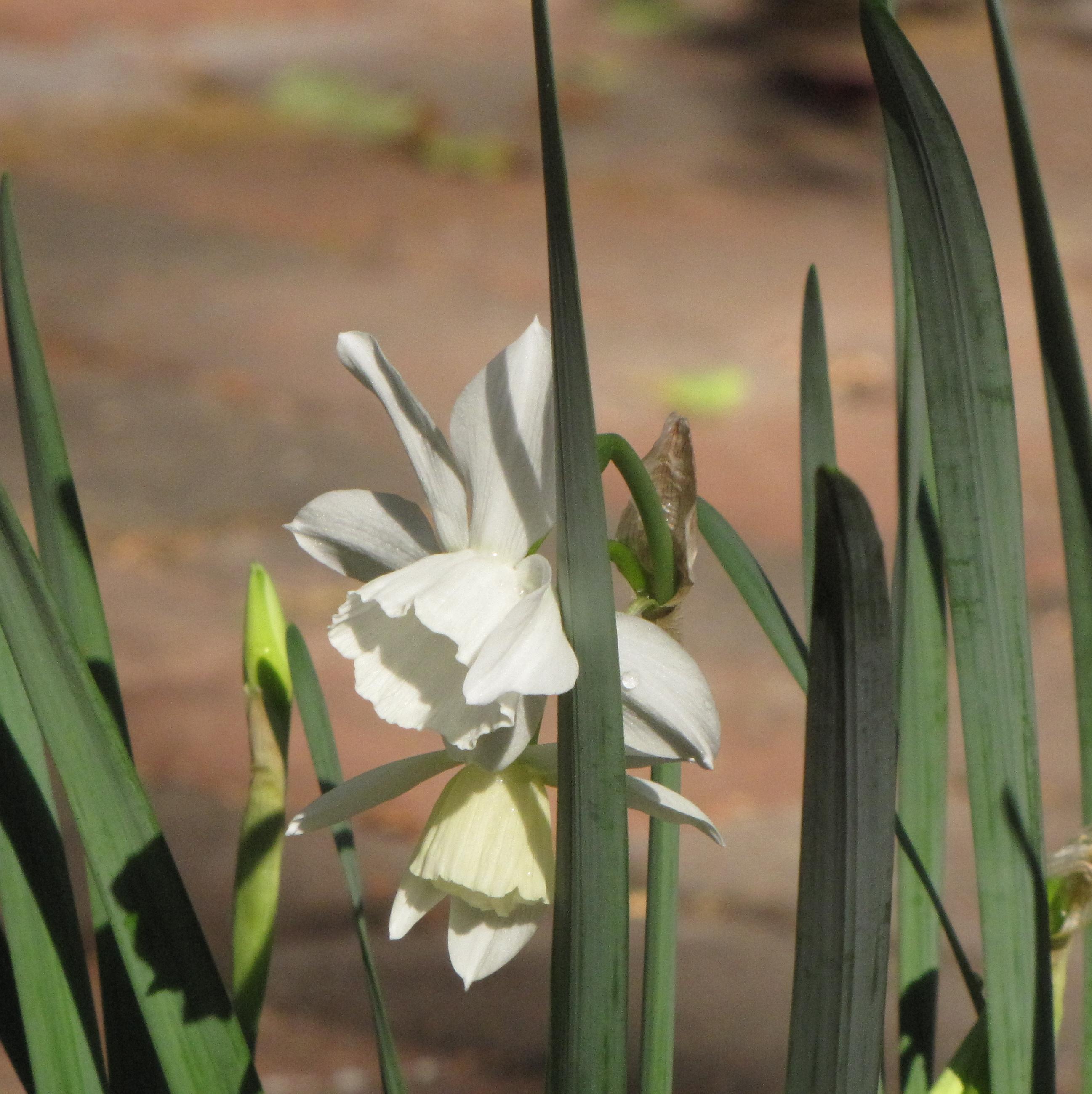 Blooming in Musashi's Garden