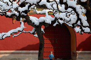 【组图】北京春雪