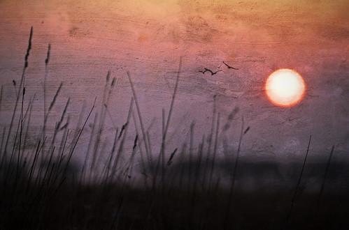 light sky sun colour texture nature grass sunrise canon landscape dawn dorset fleet weymouth 50d lenabemannatexture