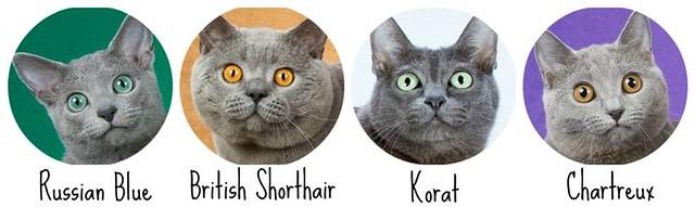 Gray Pedigree Cat Comparison