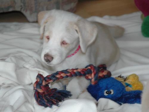 Puppy Faith 2