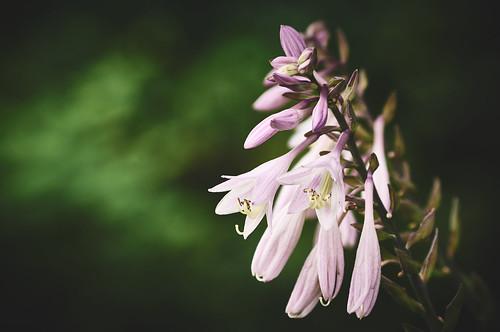 В «Сокольниках» откроют цветочный дворец изстекла средкими цветами