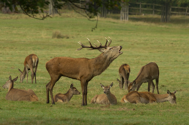 red deer group