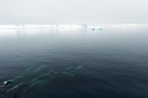 RYALE_Antarctica_Whales-11
