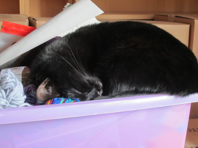 Flo asleep in yarn box 002