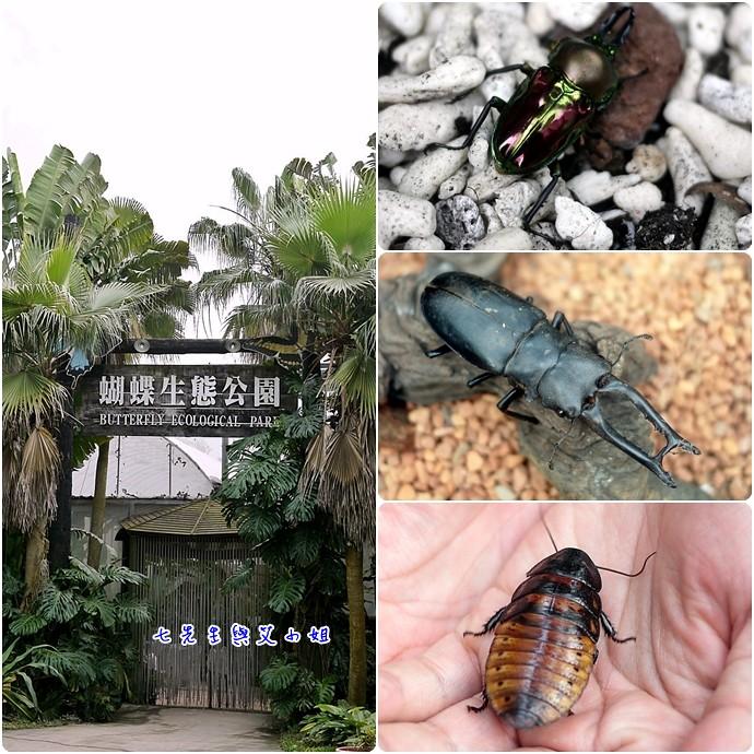 24 蝴蝶生態公園