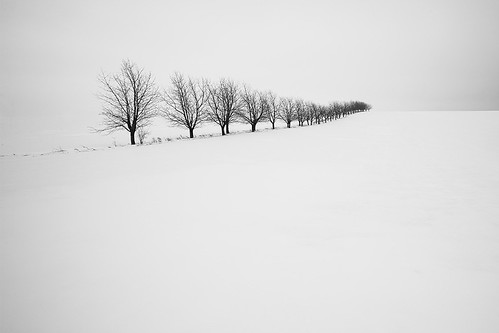 Winterland II by Wael Massalkhi