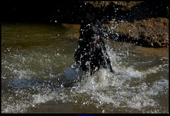 Rooneydog - Fish