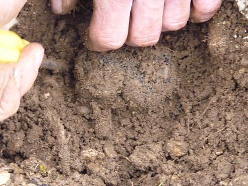 Truffes : producteur en Sud-Vendée