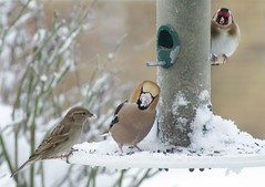Winter bird feeders 09