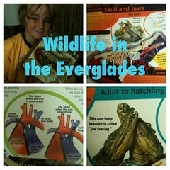 Ww is for Wildlife in the Everglades #HSwildlife #mbinstagrammies