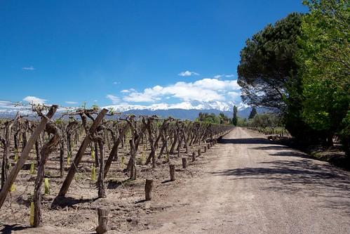 Viñedos y Andes (Bodega Kaiken, Mendoza)