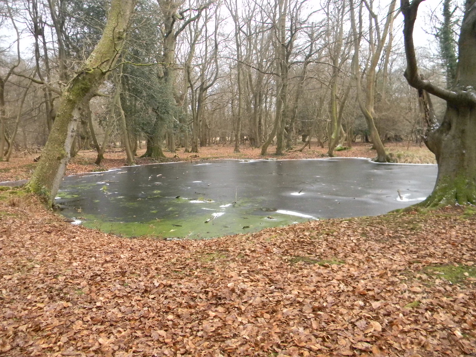 Frozen pond Tring to Berkhamsted (via shortcut)