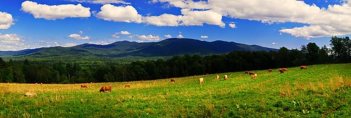 blue winter wild summer sky panorama usa white mountains green nature colors grass clouds season landscape spring vermont unitedstates cattle wide meadow vivid bluesky photograph change appalachian peaks range vt bold puffyclouds 2012 graze greenmountains appalachianmountains wideview whiteclouds scottishcattle