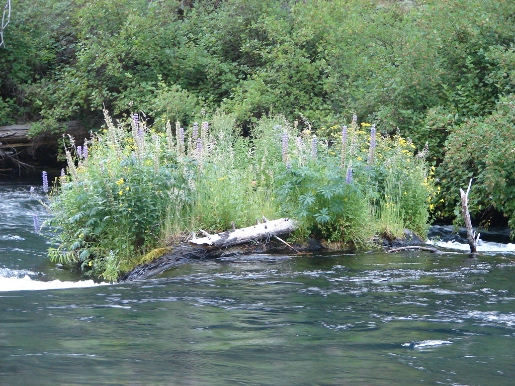 Wildflowers along the Metolius River