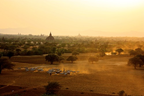 Dust rises in Bagan