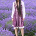 Lavender Fields Hampshire