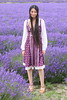 Lavender Fields Hampshire