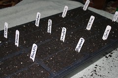 planting seeds 023