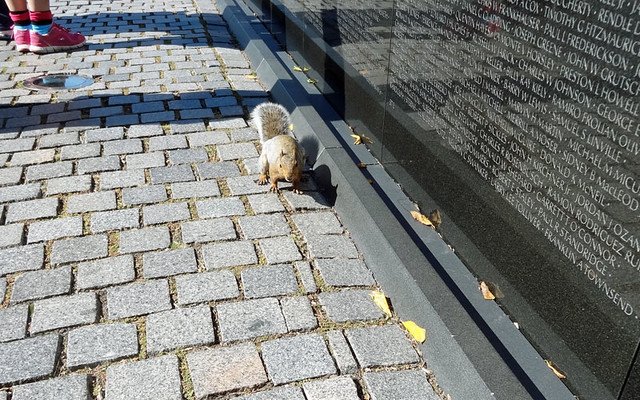 squirrel-vietnam-wall