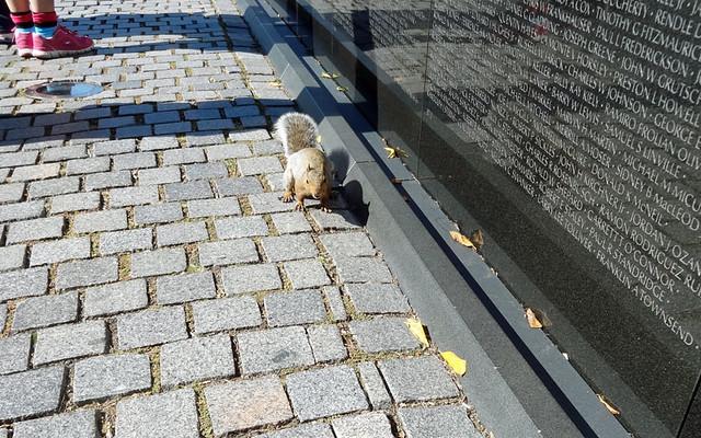 squirrel-vietnam-wall