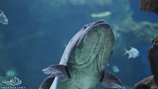 ... World Location : Jeddah Fakieh Aquarium Flickr - Photo Sharing