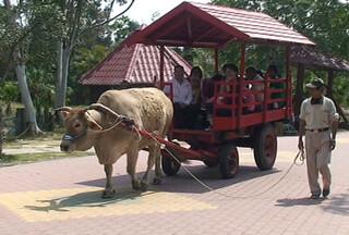 牛拉車讓孩子能達到甚麼環境教育的目的呢?(圖片來源:關懷生命協會)