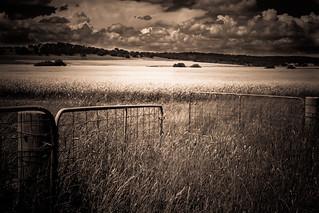 Dreaming of fields