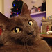 Year in Cats-2790 by Tom Royal on Flickr