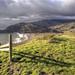 Meander in Marin