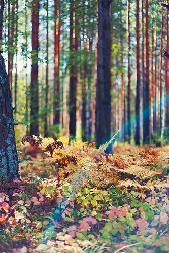 autumn light summer sun fern tree green nature grass forest time bokeh details moment ural greenworld