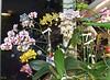 Orhideea Anului 2013 ... 8368510940_139383333e_t