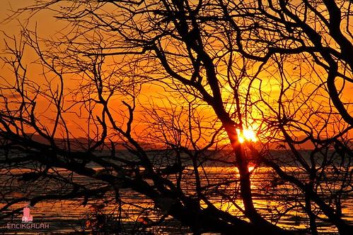 sunset sun tree silhouette sunrise landscape malaysia goldenhour kualaperlis encikgalah