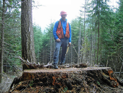 Timber thief in washington cuts down year old tree usda