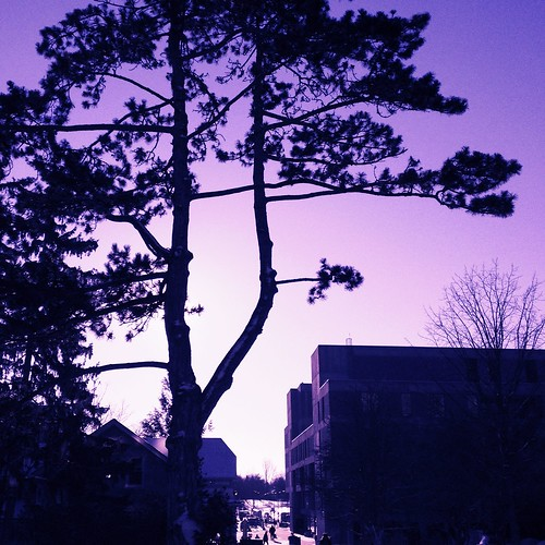 On-campus pine