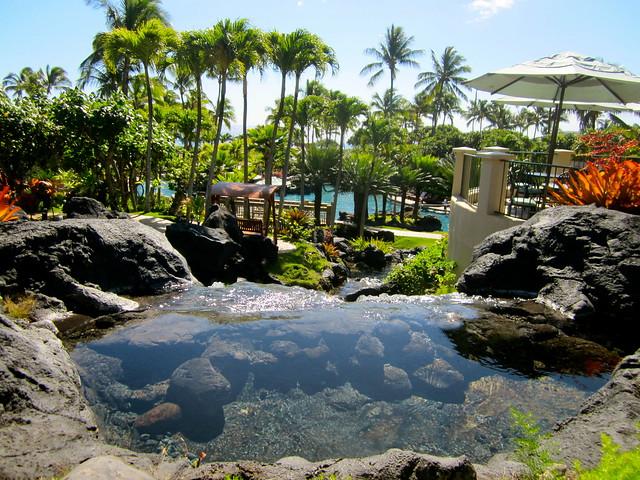 grand hyatt pool