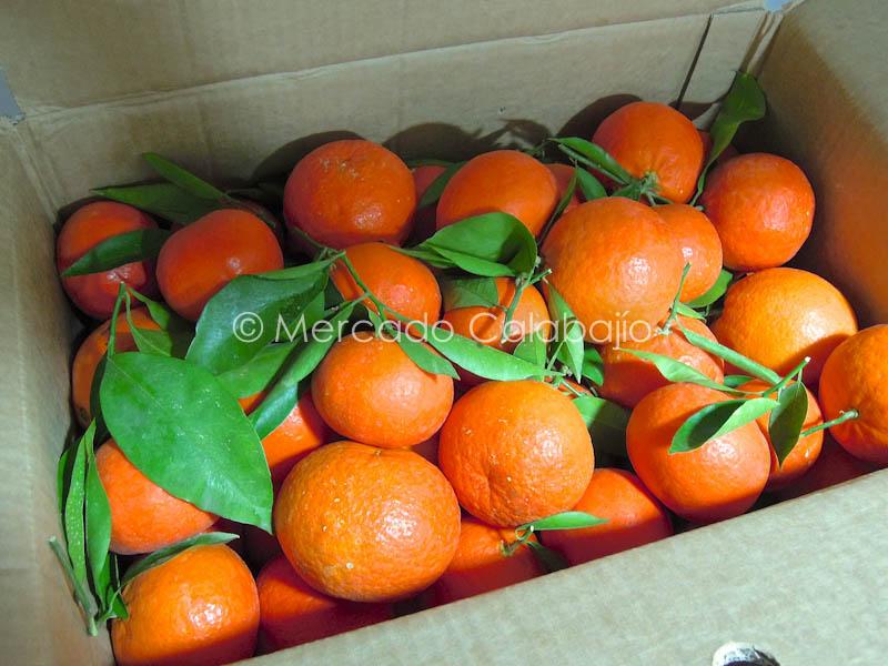 Naranjas NaranjaManía