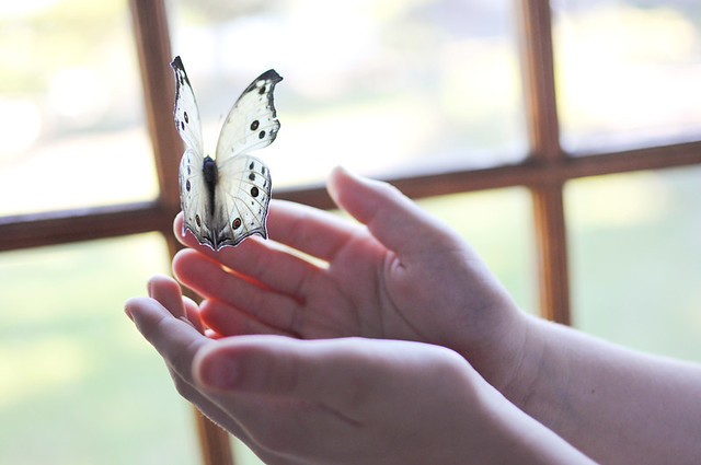 holding the butterfly