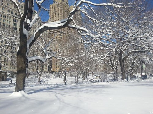Snow in Central Park Nemo Blizzard