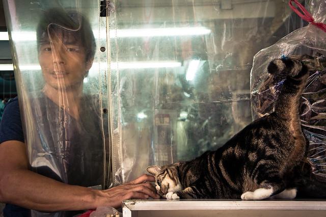 Man Pets Cat