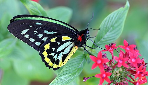 canon butterfly florida ngc thegalaxy 5dmkiii coth5 mygearandme 100mmmacrof28lisusm