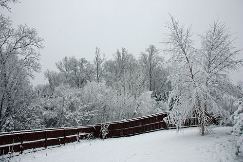 backyard in snow