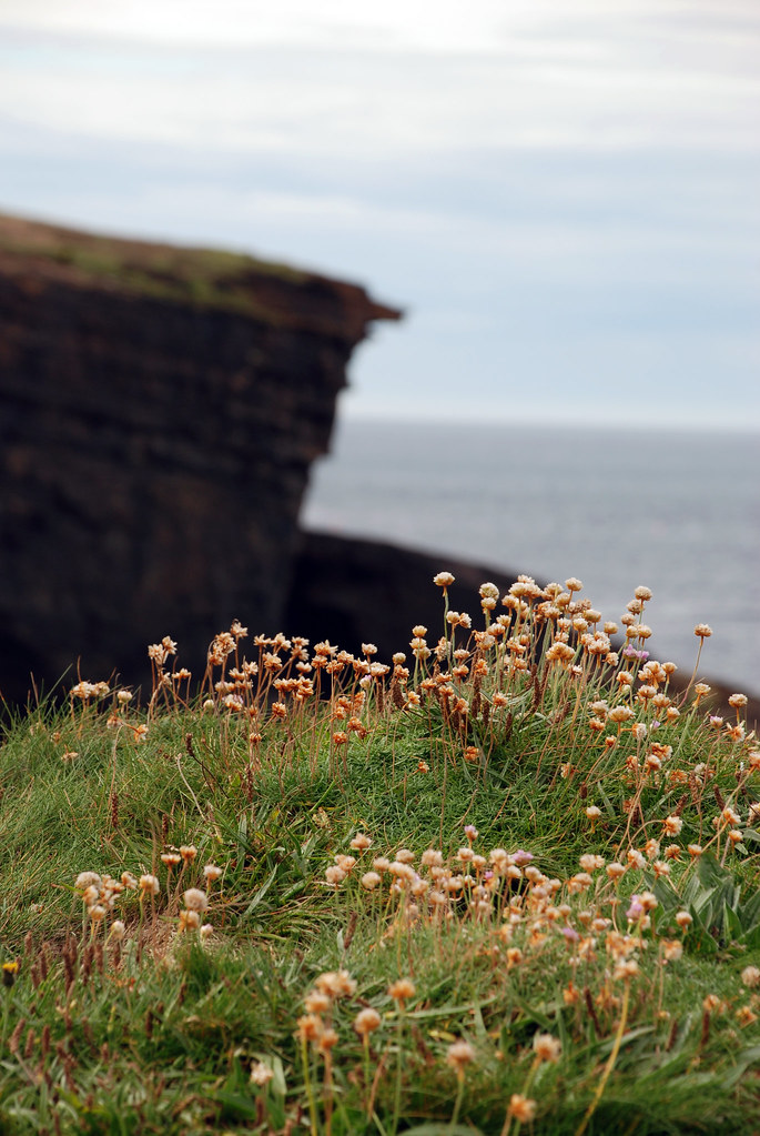 orkney15