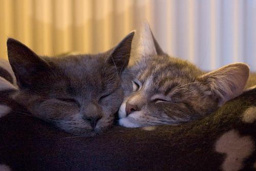 Kittens 17