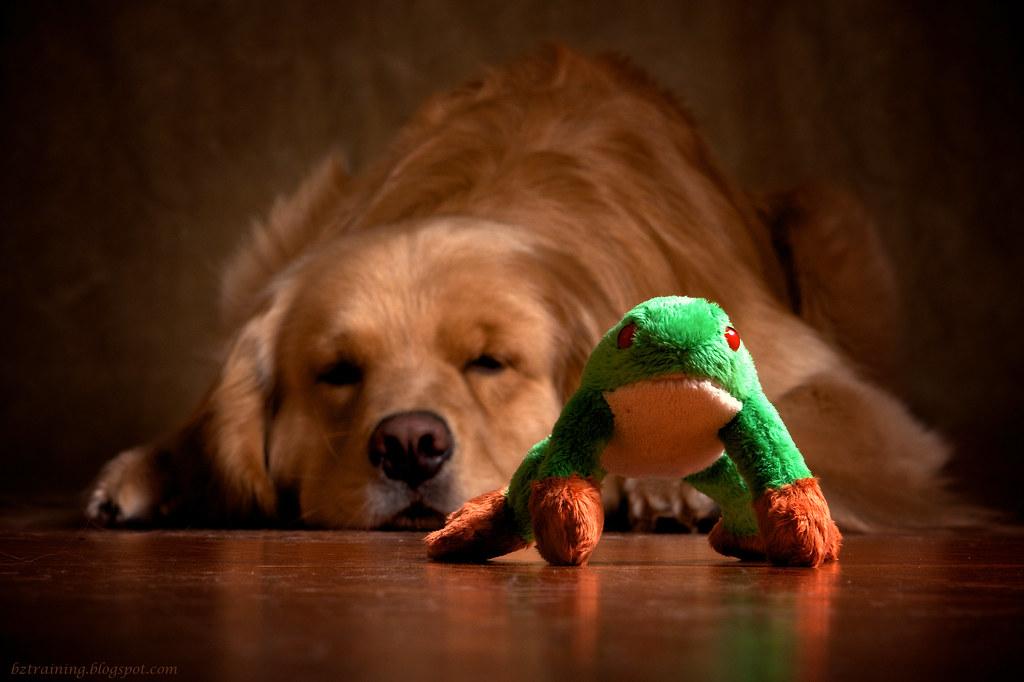 Jump Froggie Jump!